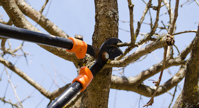 Tree Removal Trimming Amp Tree Service In Stockton Ca